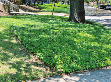 Celebrate Earth Day every day with sustainable landscape practices