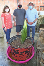 "NSU awaits bloom of giant ""corpse"" flower"
